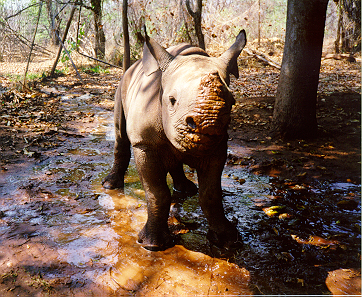 Mbizhi prior to taking a mud bath, October 1997