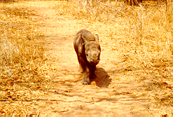 Taking Mbizhi for a walk in the bush -- September 1997